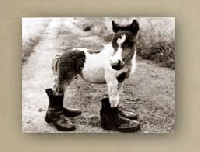 Horse With Boots Or Shoes