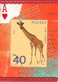 WIYM: APC Animal Series-Giraffe