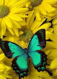 Quick Swap - Butterflies!