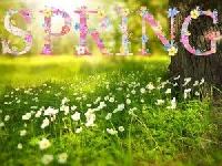 Simple Easter or Spring Card Intl