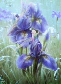 Flower themed Postcard Swap