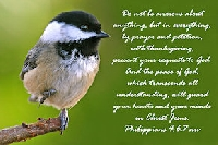 Scripture Postcard USA #2