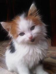Meowpril - Cat Postcard Swap (USA)