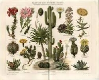Botanical Postcard swap #1 USA