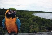 PTG: Bird postcard