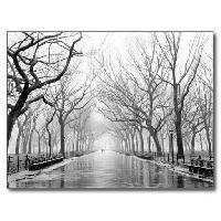 Simply a Black & White Postcard USA