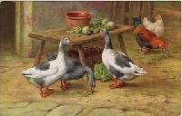 QUICK SWAP! - Duck, Duck, Goose! PC