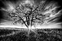 I love trees! Postcard swap - USA