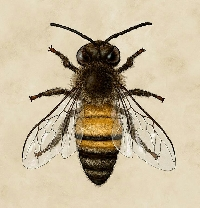 Bee ATC