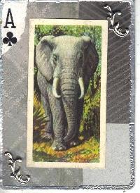 WIYM: APC Animal Series-Elephant