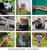 Animal Postcard Swap USA #7