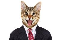 Cat Postcard Swap USA #11