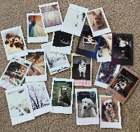 Profile Based Polaroid Swap!
