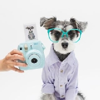 Instax Photo - Animals <3