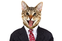Cat Postcard Swap USA #12
