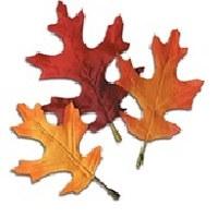 BTH: Magical JJ supplies Autumn