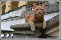 INT Cat Postcard