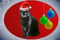 CHRISTMAS CARD US - Nwbie Frdly