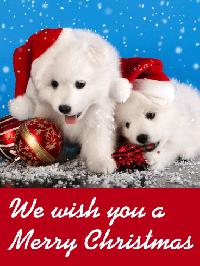 Animal Christmas Card Swap - USA only