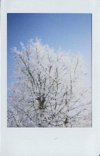 Instant Photo Swap - International <3 December