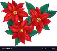 Recycled Christmas Card Postcard ~ Poinsettia
