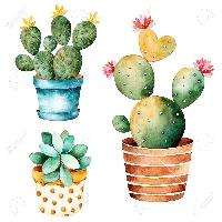 WIYM: Cactus/Succulant ATC