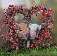 Storytime Valentine's Day Swap