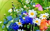QC: 5 inch charm squares -- floral