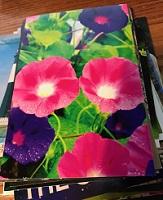 POSTCARD: Flowers