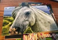 POSTCARD: Horses