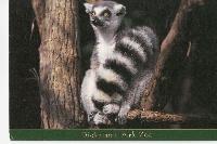 PH: Zoo or Zoo Animal (Blank or Naked)