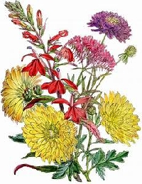 Pinterest - Flowers