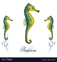 Oceana: Seahorse