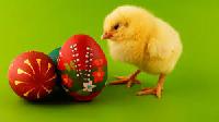 Easter Tag Flip