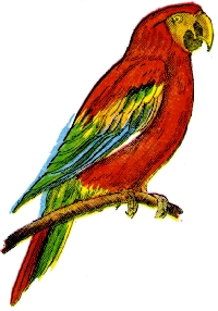 SUSA - Send 3 Exotic Bird ATCs
