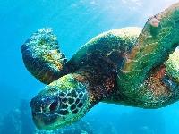 Sea Turtle PC Swap