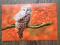 AFAWLG!Woodland animal in autumn postcard swap