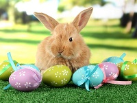 Bunny hop! profile decorations