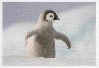Penguin PC Swap