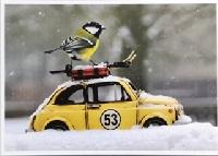 AFAWLS: Winter Postcard in Summer