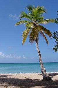 ATC - Palm Trees (USA)