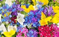 ATC - Flowers (USA)