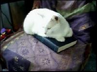 Private swap - white kitties