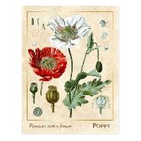 Gabi's Quick Swap #41 - Botanical/Plant PC