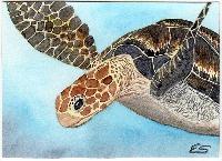 turtle-atc