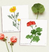 🌱🌿💐🌳🍃🍀🍁Botany: Botanical Postcard Swap🍁🍀🍃🌳💐🌿🌱