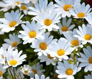 SPCP: Flower Photo Postcard