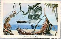 WIYM: Bird Postcard  ( International)