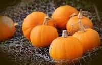 Pumpkin Season (2019)