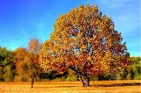 Autumn postcard international #2